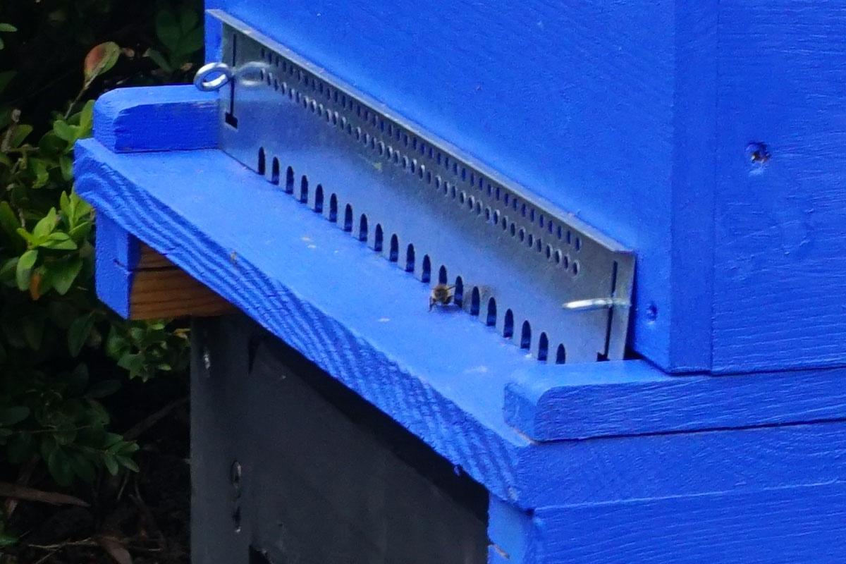 Une abeille sort de la ruche du jardin du Familistère.