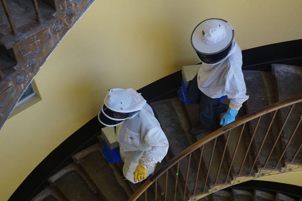 La photographie montre deux apiculteurs en tenue dans un escalier.