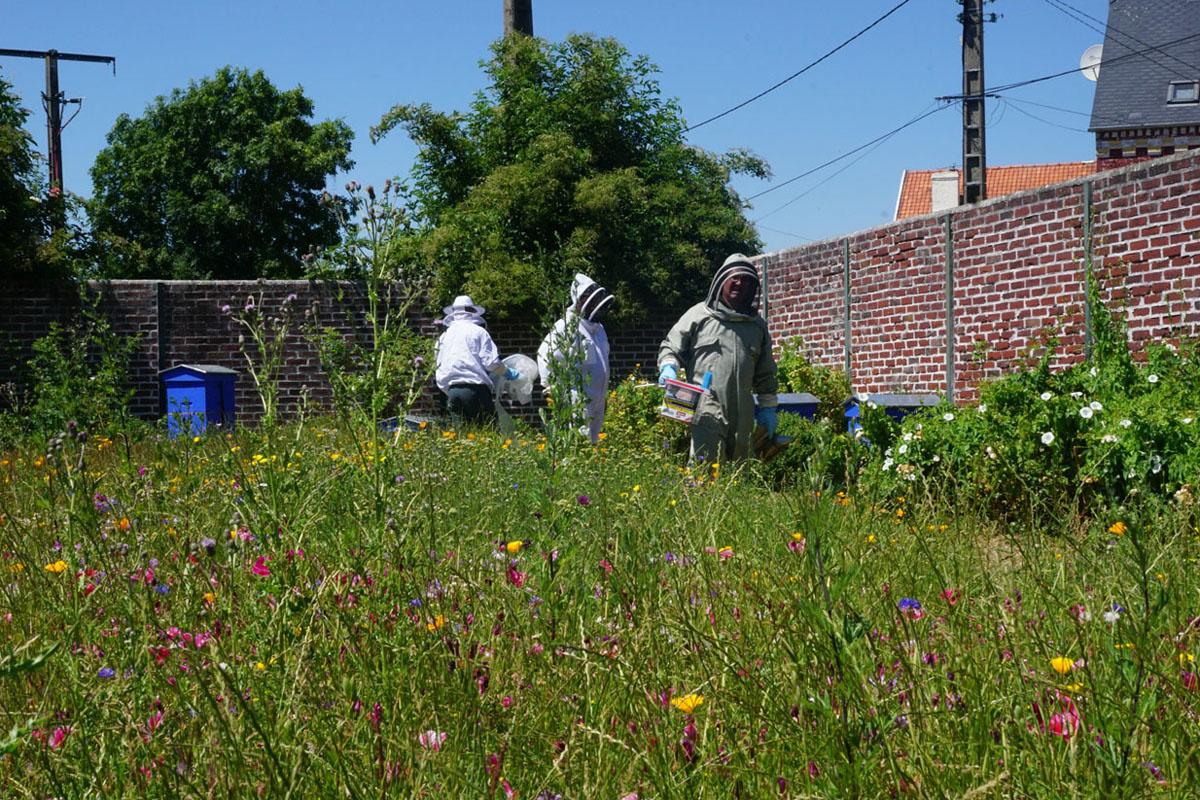La photographie montre des apiculteurs en tenue dans une prairie.