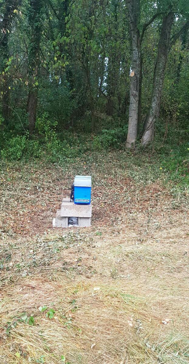 La photographie montre une ruche près d'un bois.