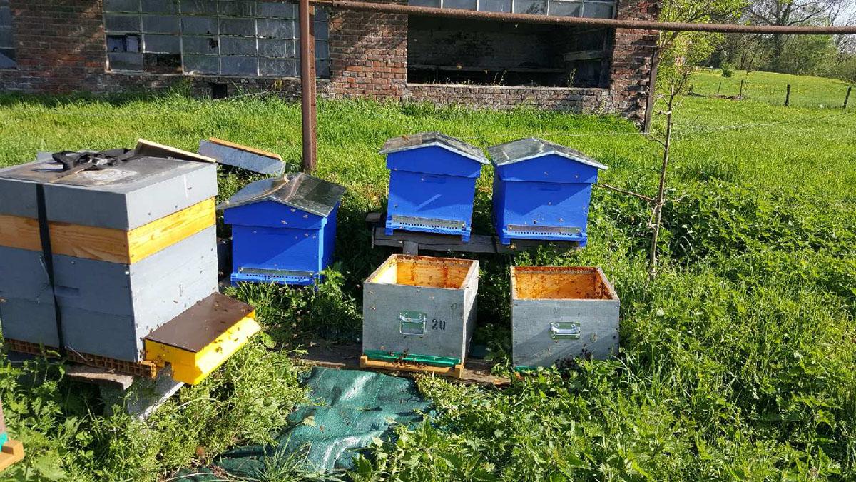 Les trois ruches du Familistère dans le rucher de Jean-Marie Camus