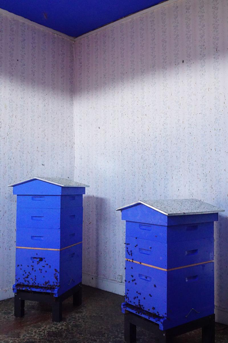 La photographie montre les deux ruches de la chambre de pollinisation du Familis