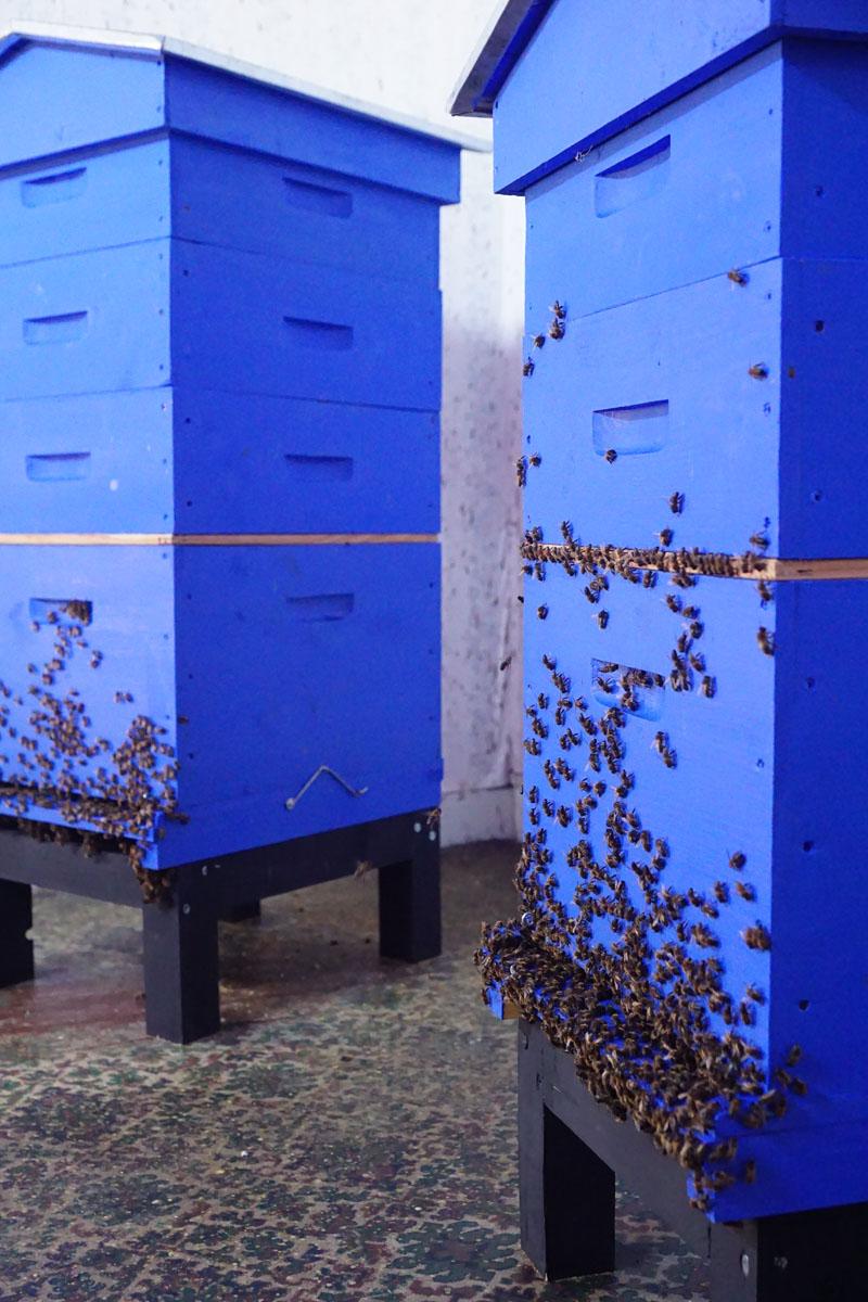 La photographie montre deux ruches dans un appartement.