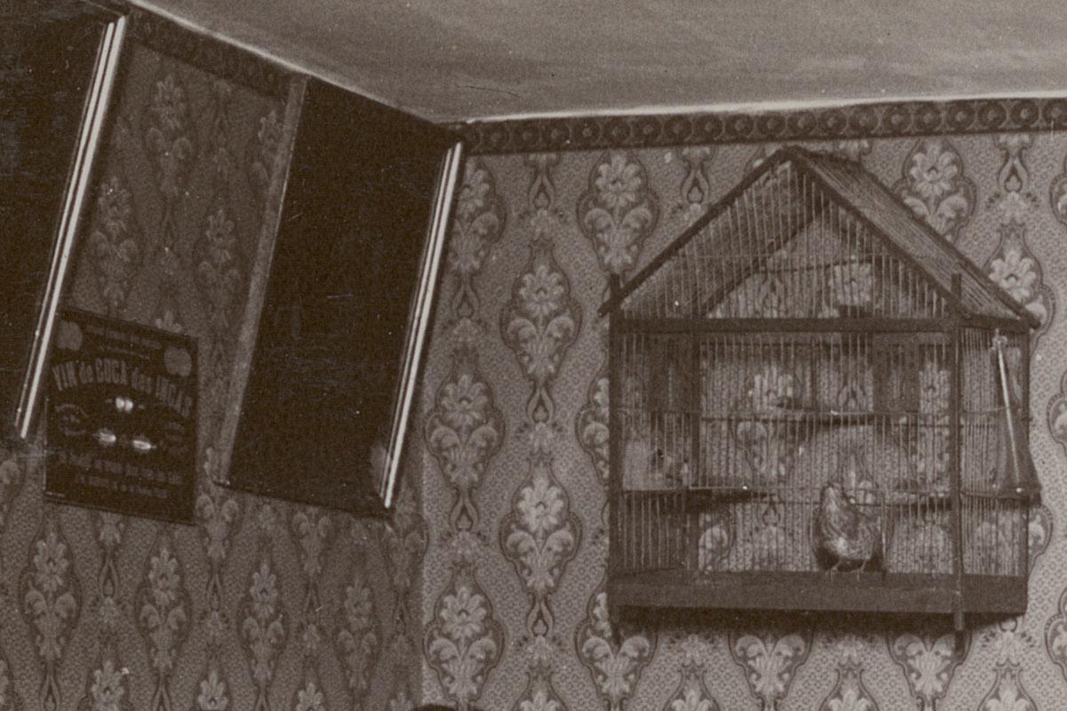 Détail de la cage à oiseaux sur la photographie de la cuisine du logement