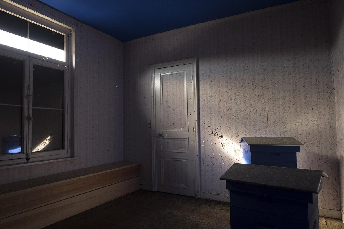La photographie montre des ruches dans un appartement.