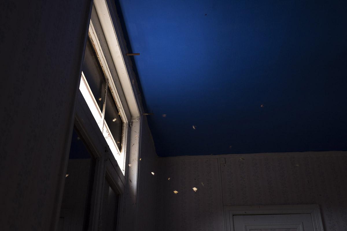 La photographie montre des abeilles en vol dans un appartement du Familistère.