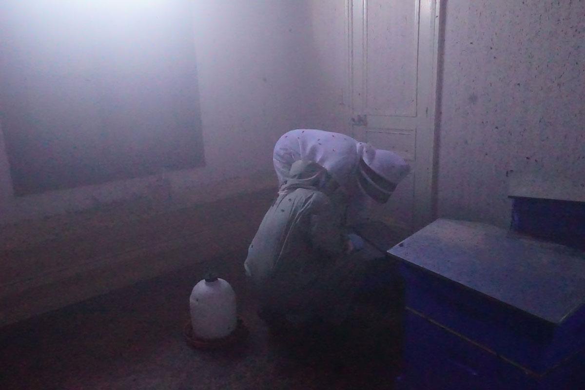 La photographie montre l'intérieur de la chambre de pollinisation.
