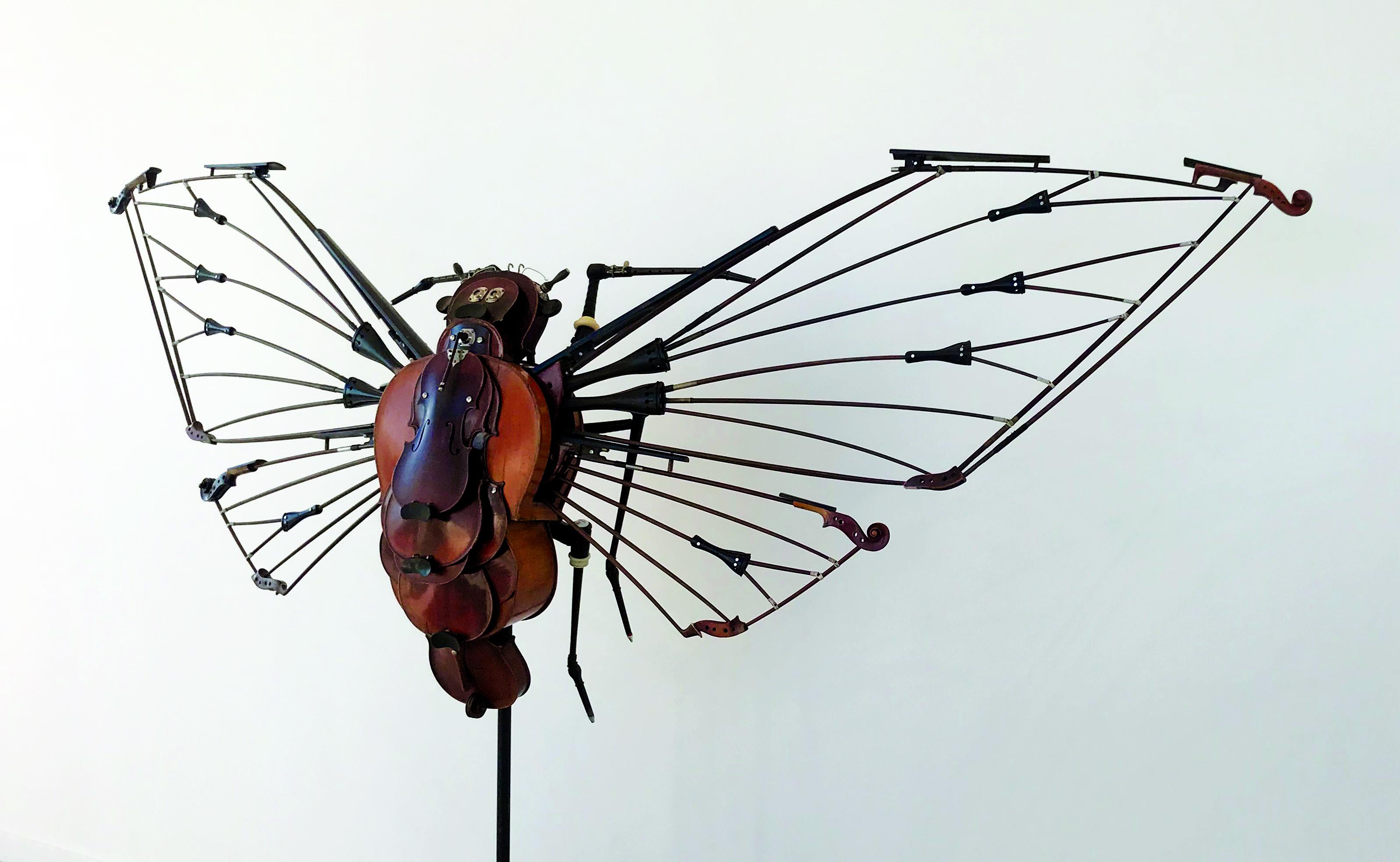 Vue de profil de Megapomponia Merula